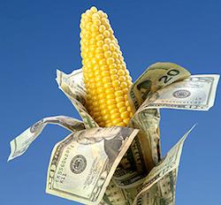farm-bill-corn